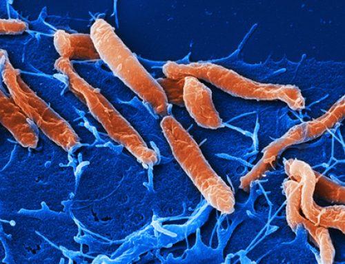 Helikobakter Pilori İle İlgili Bilmek İstediklerimiz